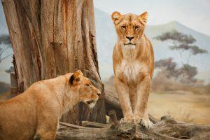 Animais carnívoros não são a mesma coisa que canibais.