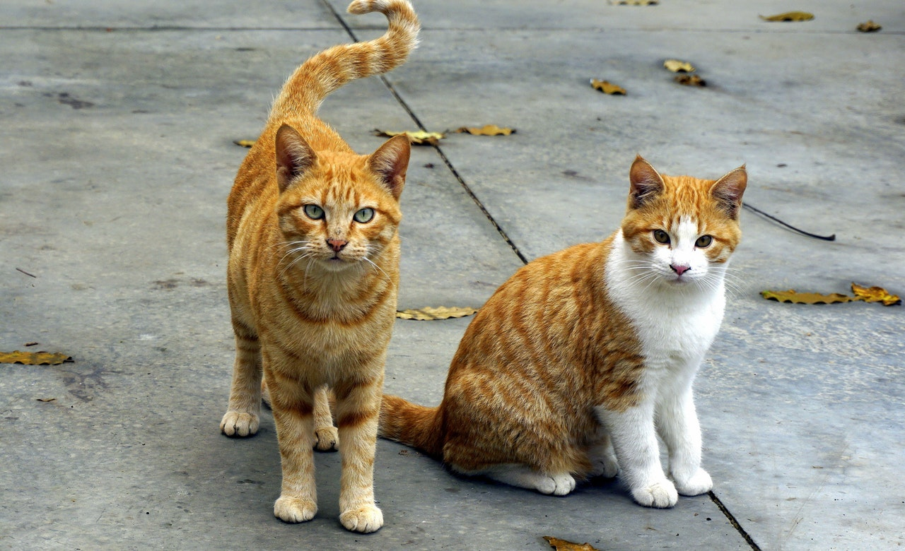 dois gatos de rua