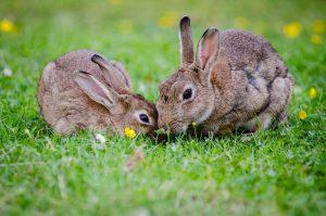 Animais herbívoros são classificados quanto ao comportamento alimentar.