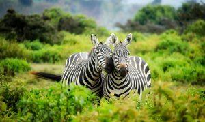 O principal alimento dos animais herbívoros deve ser de origem animal.