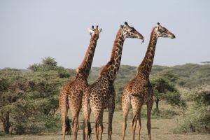 animais herbívoros