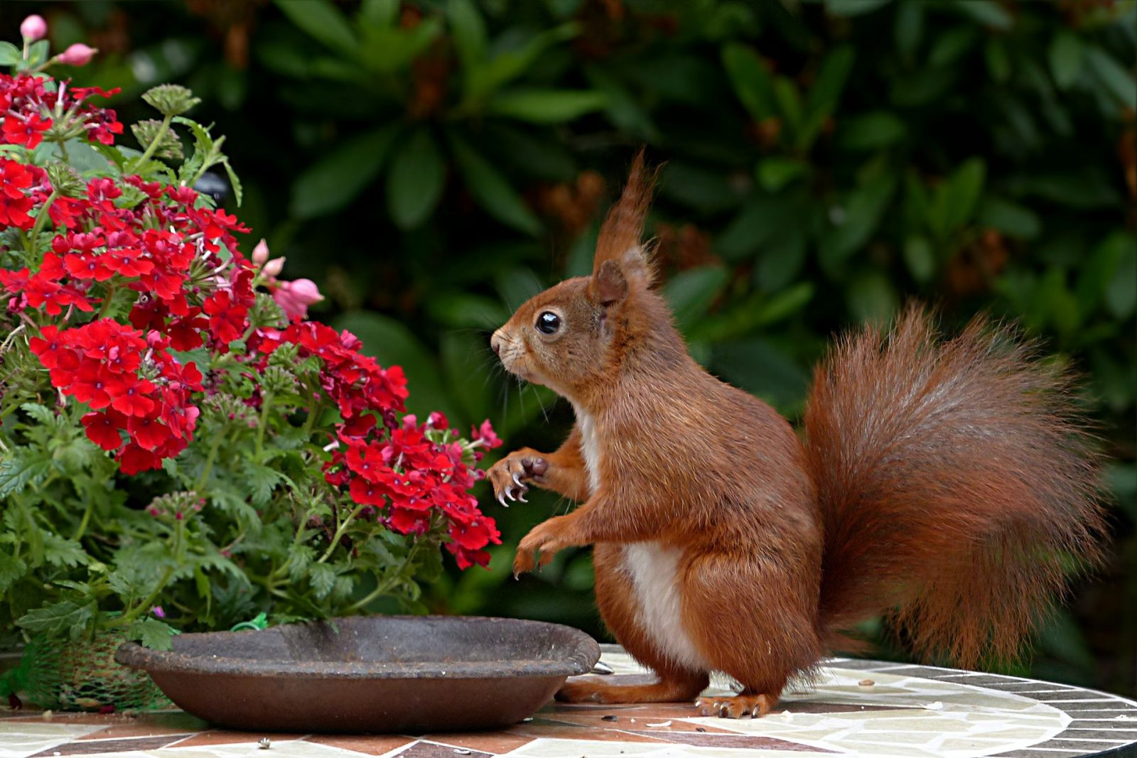 O esquilo é um animal onívoro.