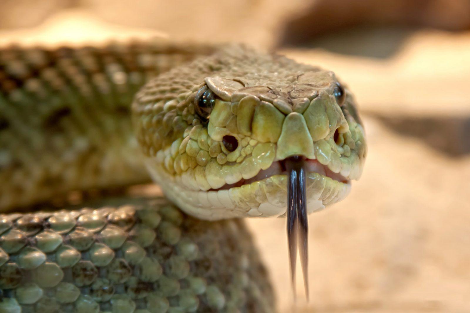 animais peçonhentos cobras