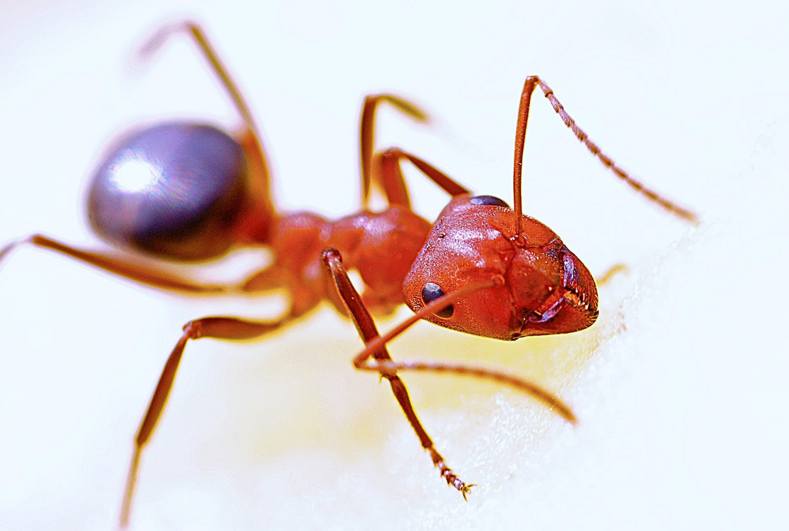 animais peçonhentos formigas