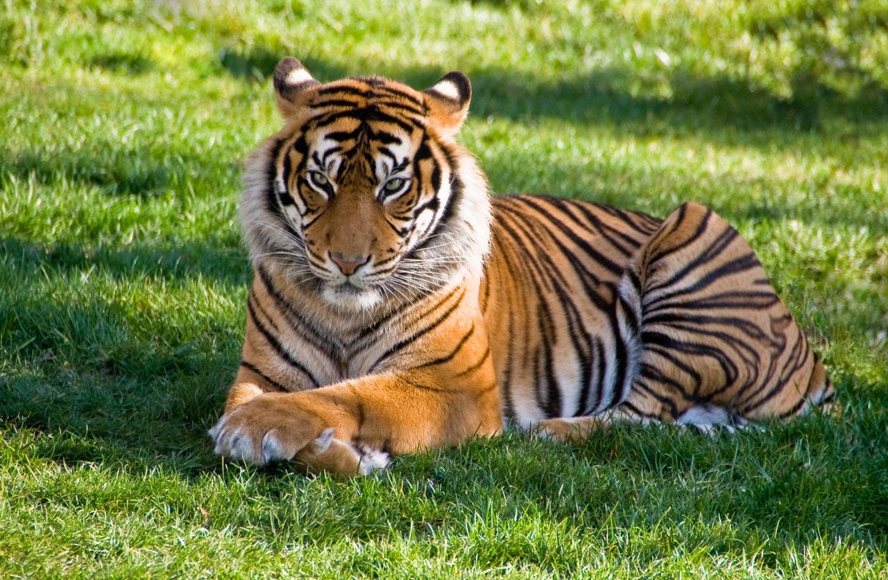 Se você tem um animal selvagem é preciso regularizá-lo.