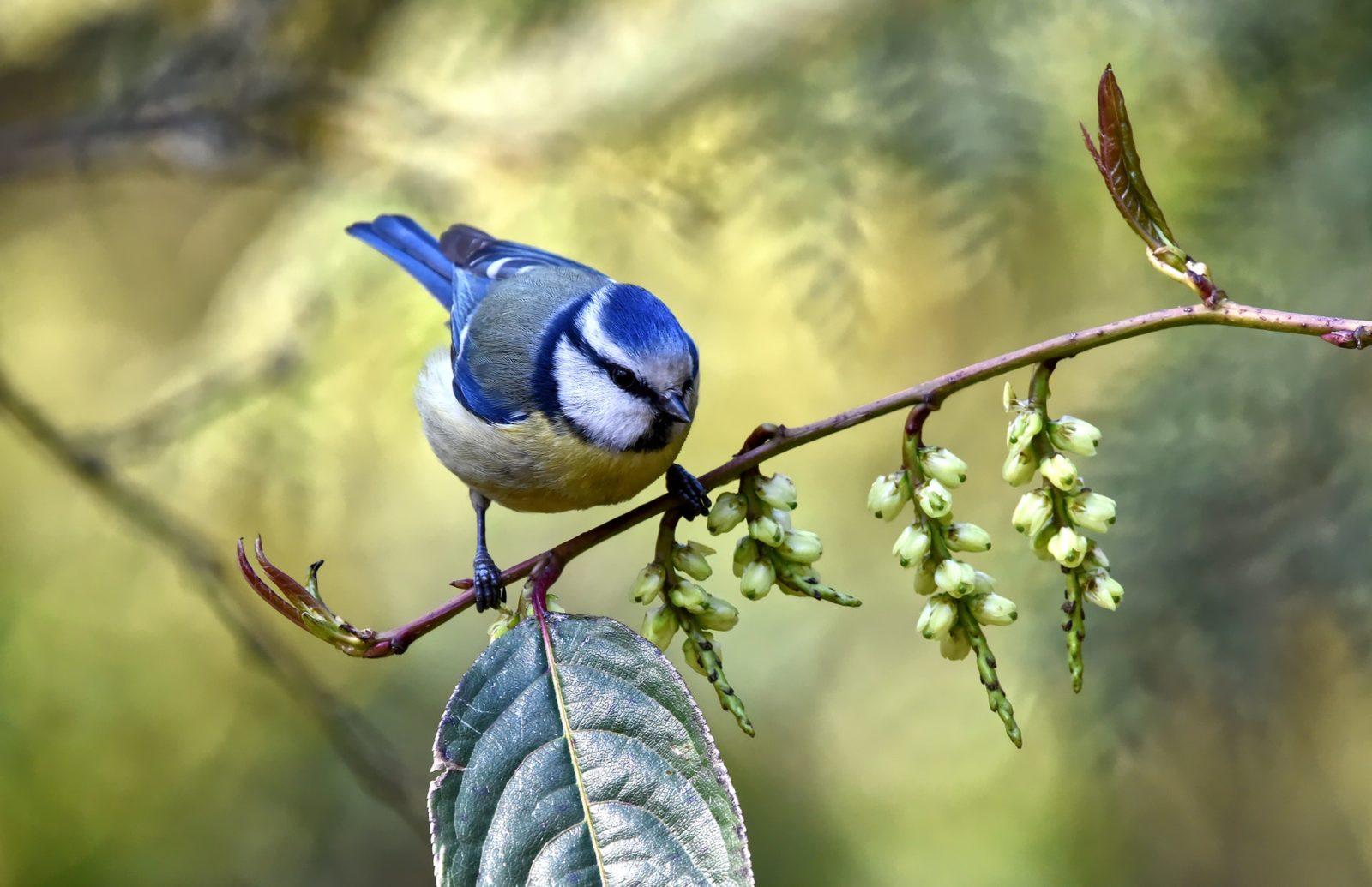Bicho de estimação como as aves tendem a agradar pessoas educadas e tranquilas.