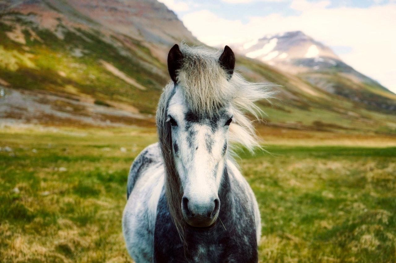 Bicho de estimação como cavalo tende a ser de homens de personalidade mais agressiva e dominante.