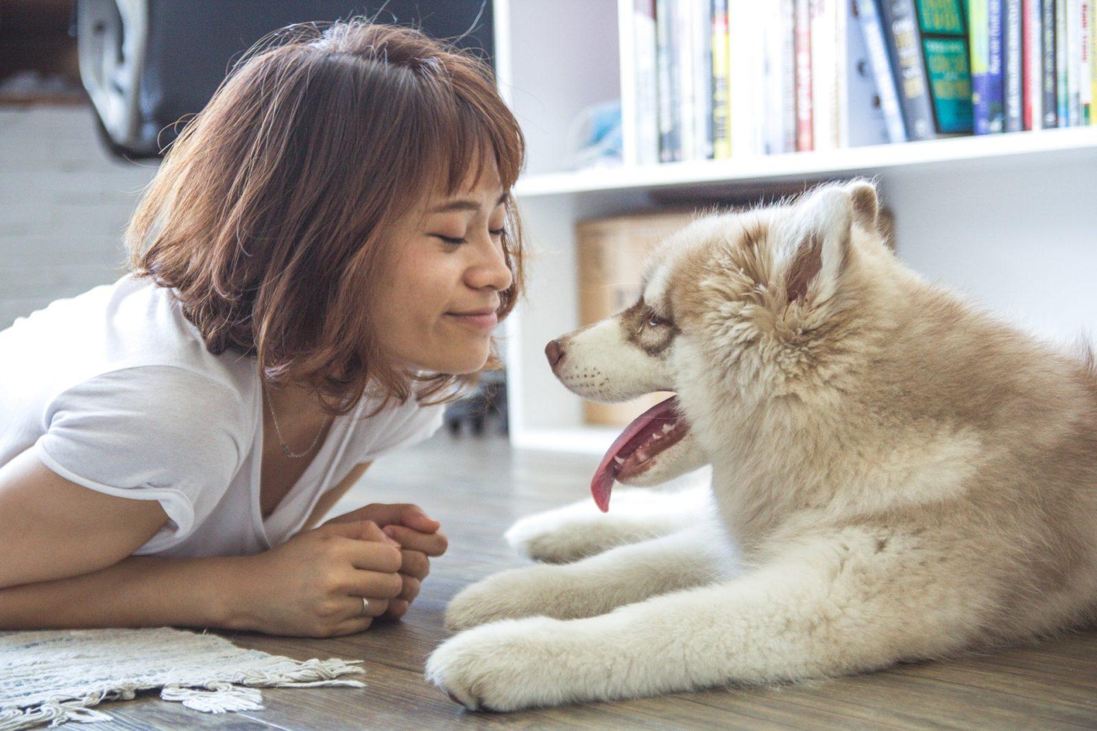 O cachorro é o bicho de estimação preferido de todos no mundo.