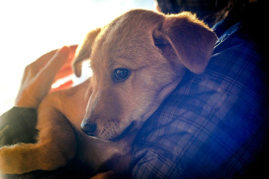 Ansiedade canina: Cachorro no colo do seu dono sendo confortado por causa de barulho