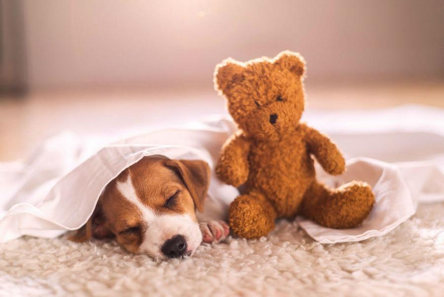 Ansiedade canina: Filhote dormindo com bichinho de pelúcia ao lado para lhe servir de conforto materno