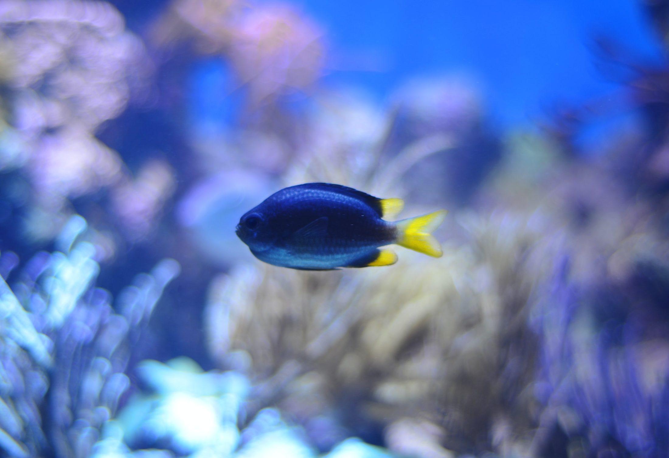 peixe de água salgada em aquário marinho