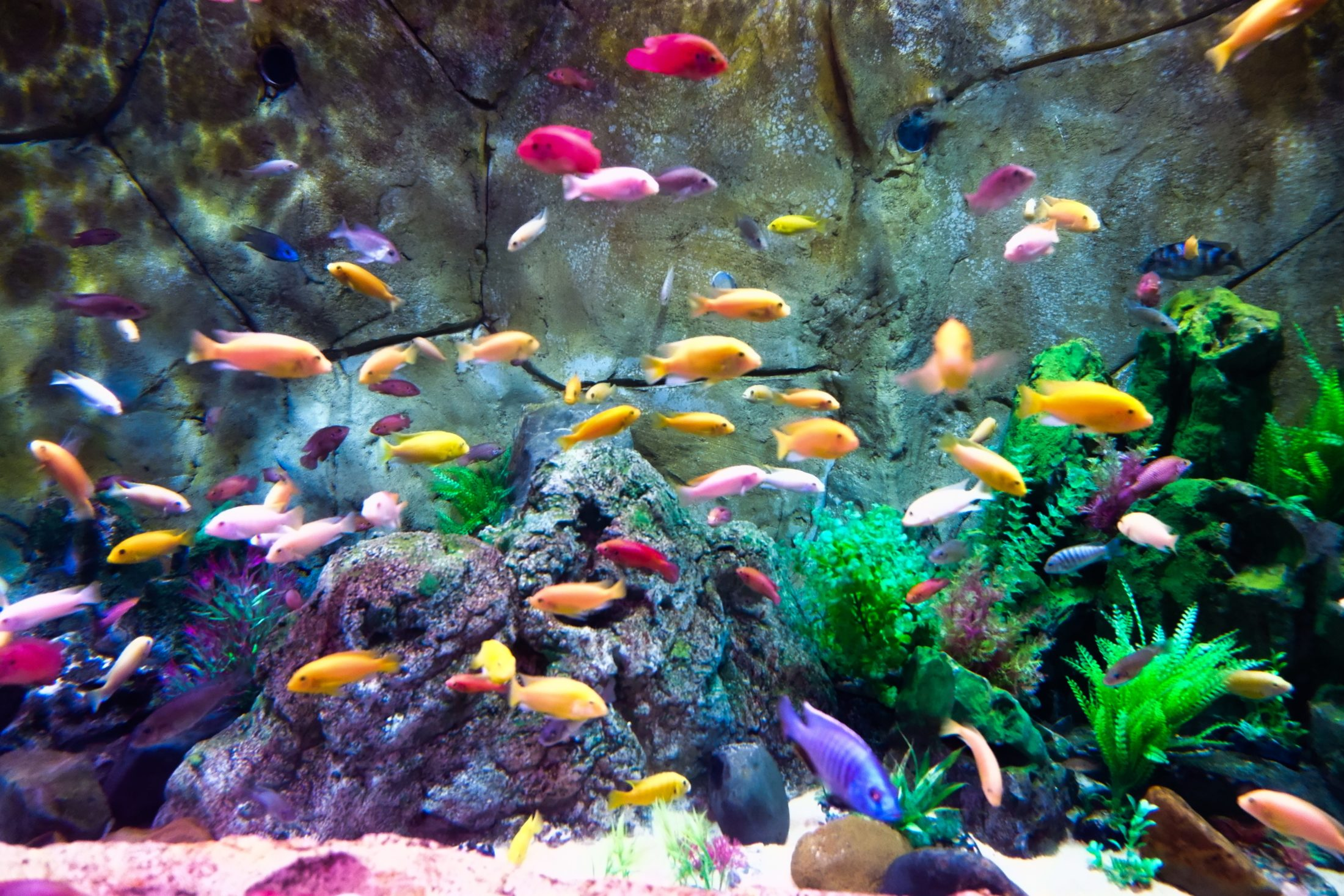 estilos de montagem para aquário para peixe
