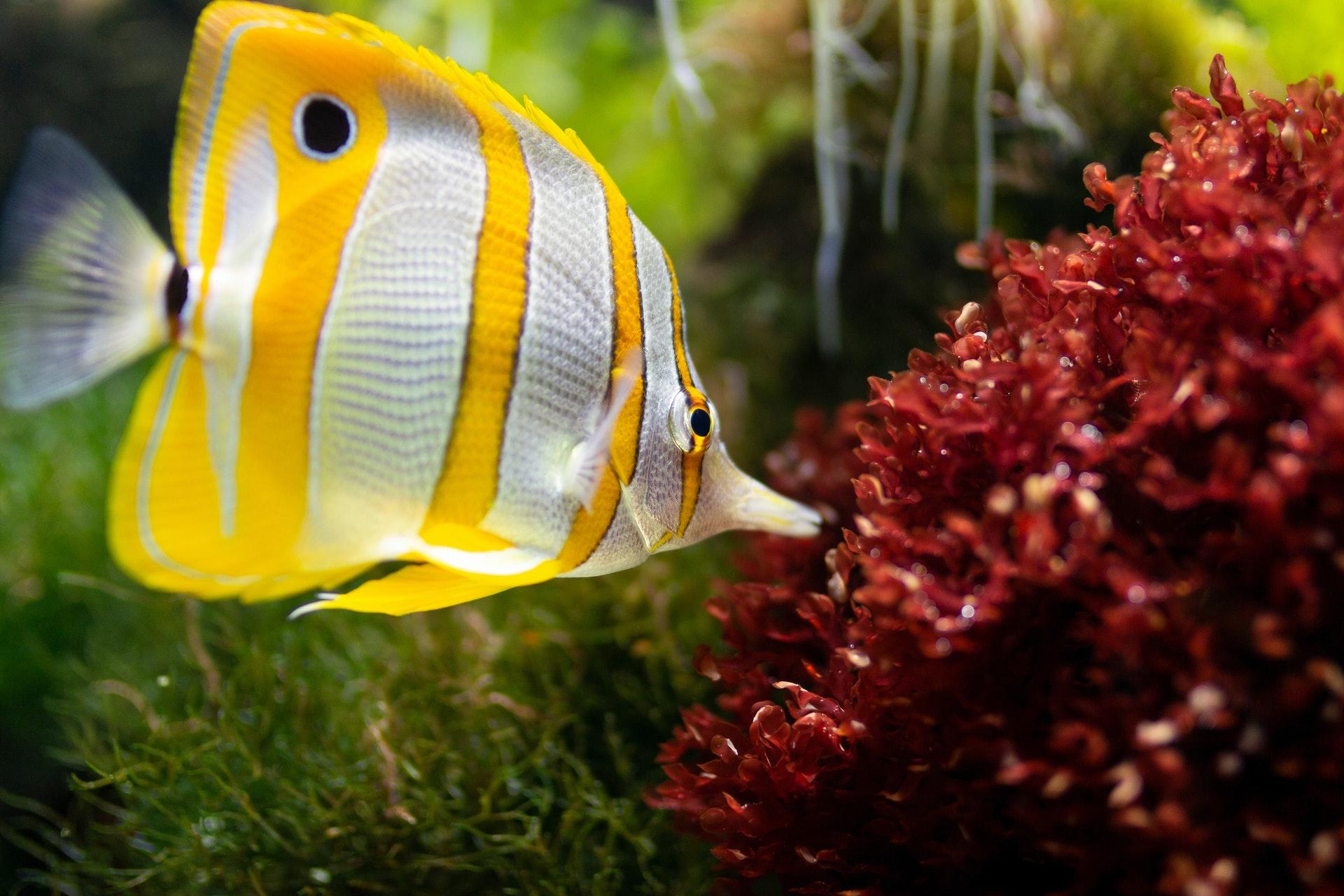 peixe em aquário marinho