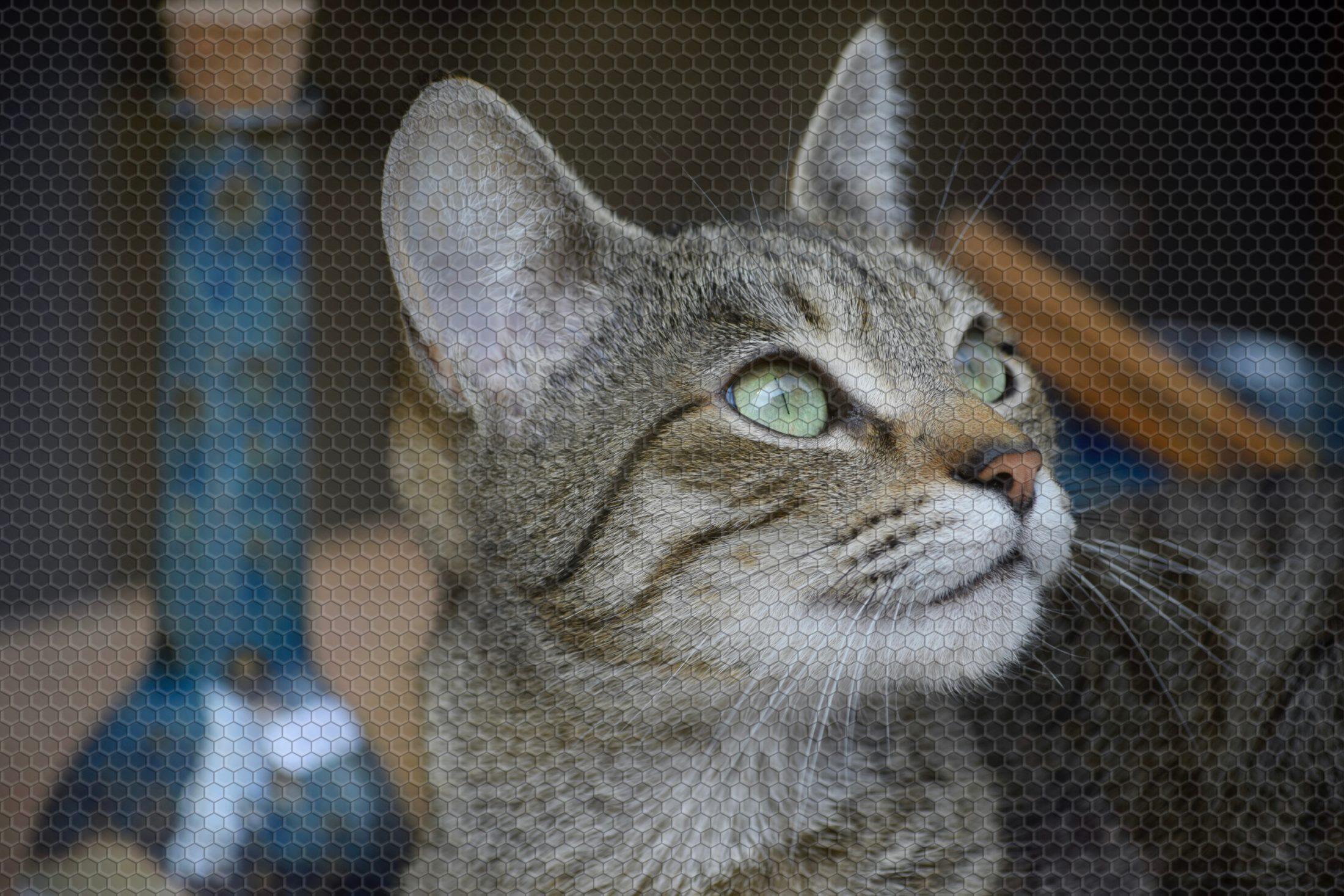 gato olhando para cima