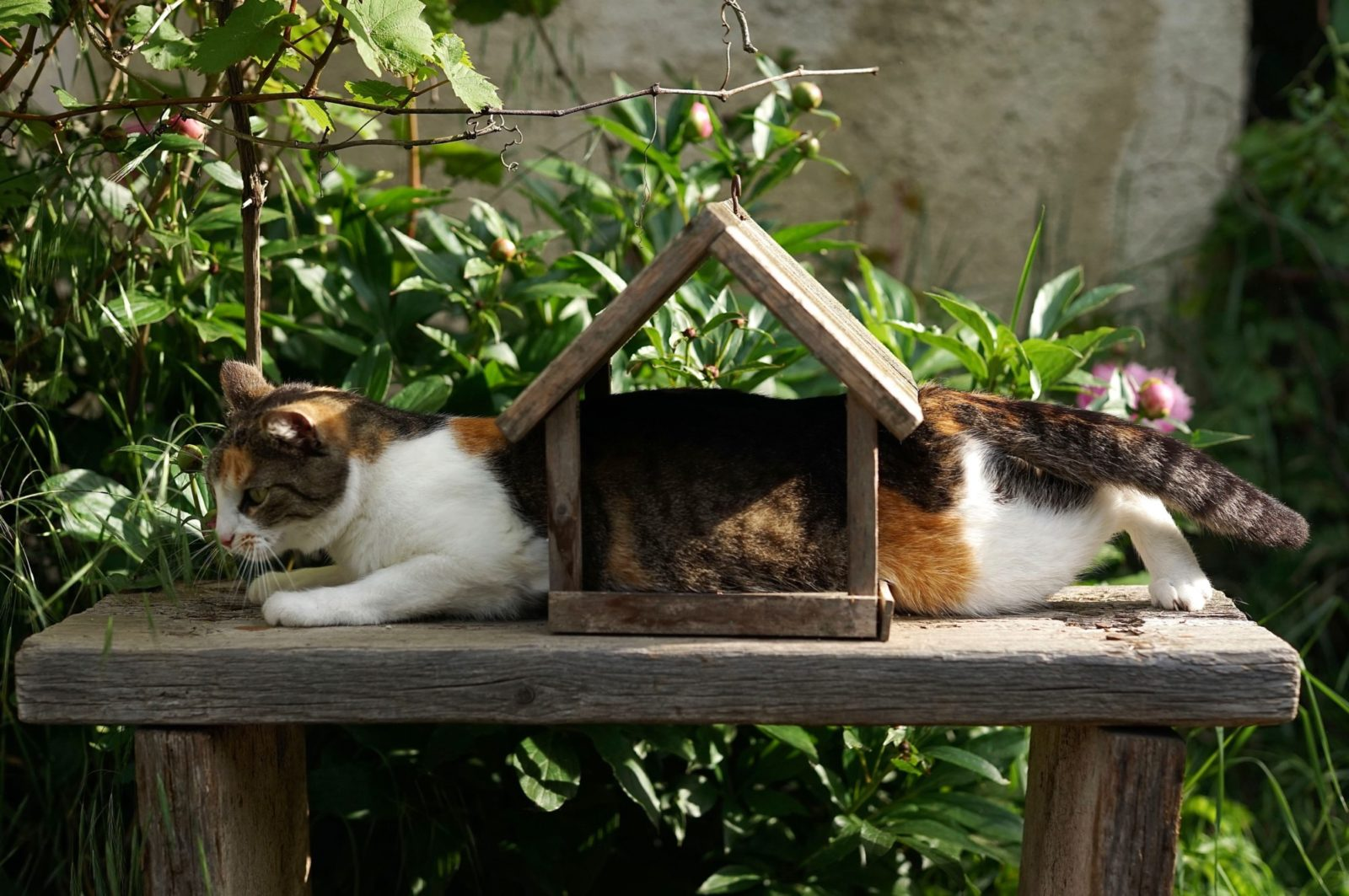 arranhador para gato de casinha