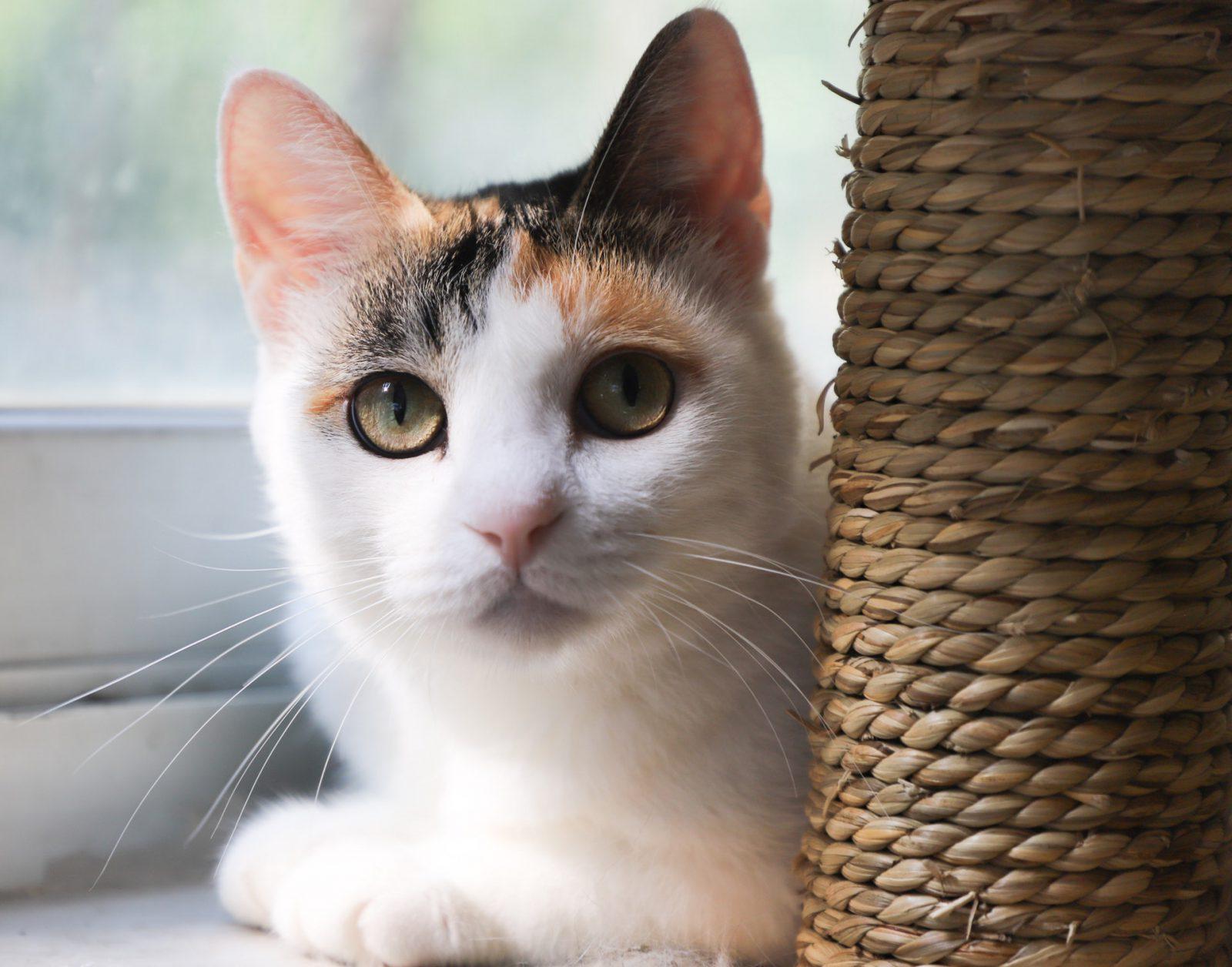 É possível fazer você mesmo o seu arranhador para gatos.