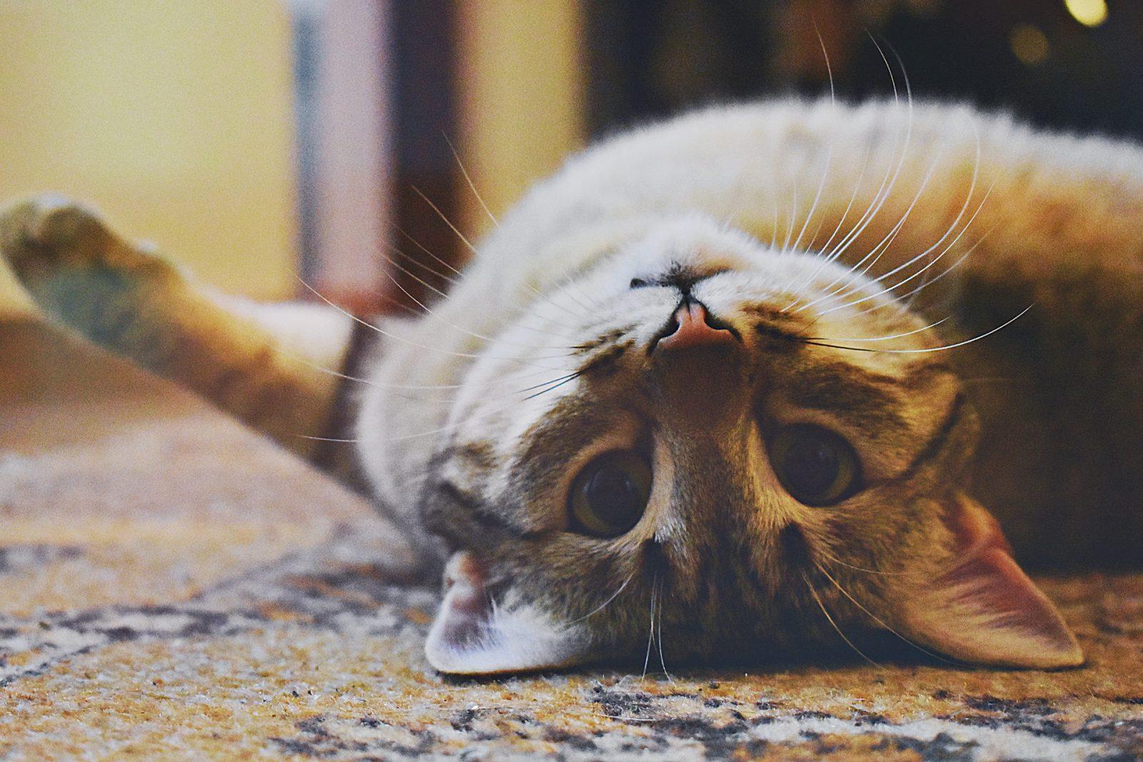 É preciso instalar o arranhador para gatos em local apropriado.