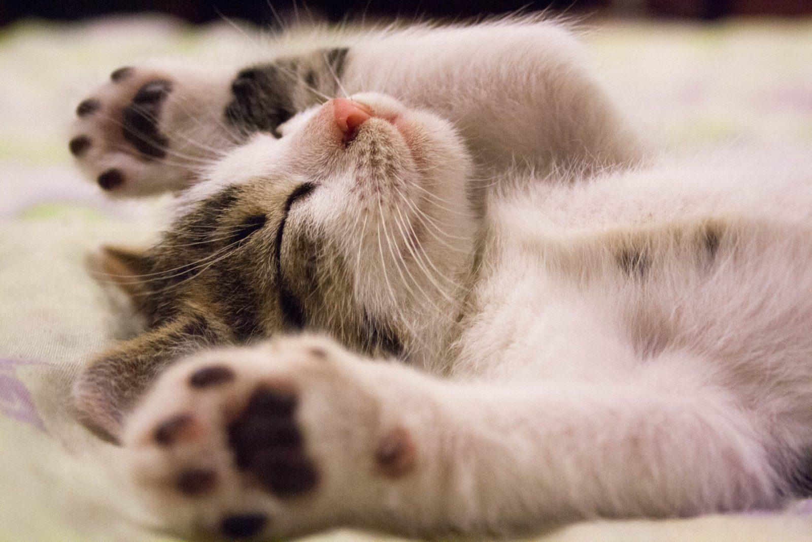 O arranhador para gatos é um brinquedo muito comum para o comportamento dos gatos.