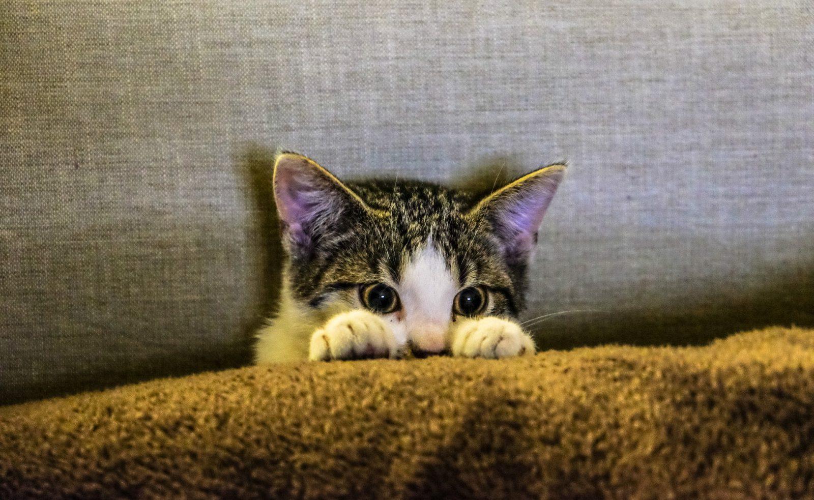 Preste atenção ao escolher o seu arranhador para gatos.