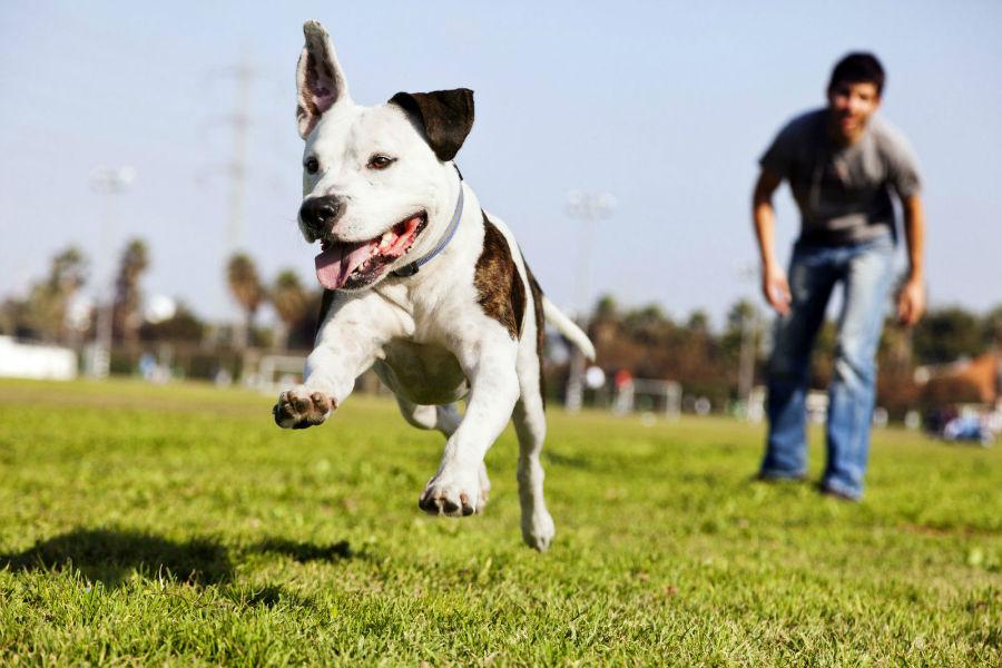 atividade-preferida-correr