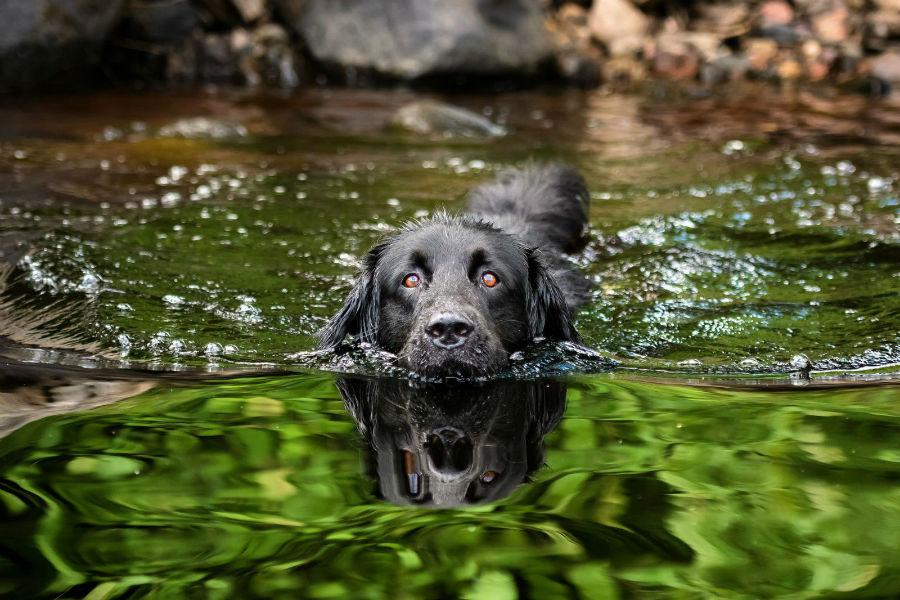 atividade-preferida-nadar