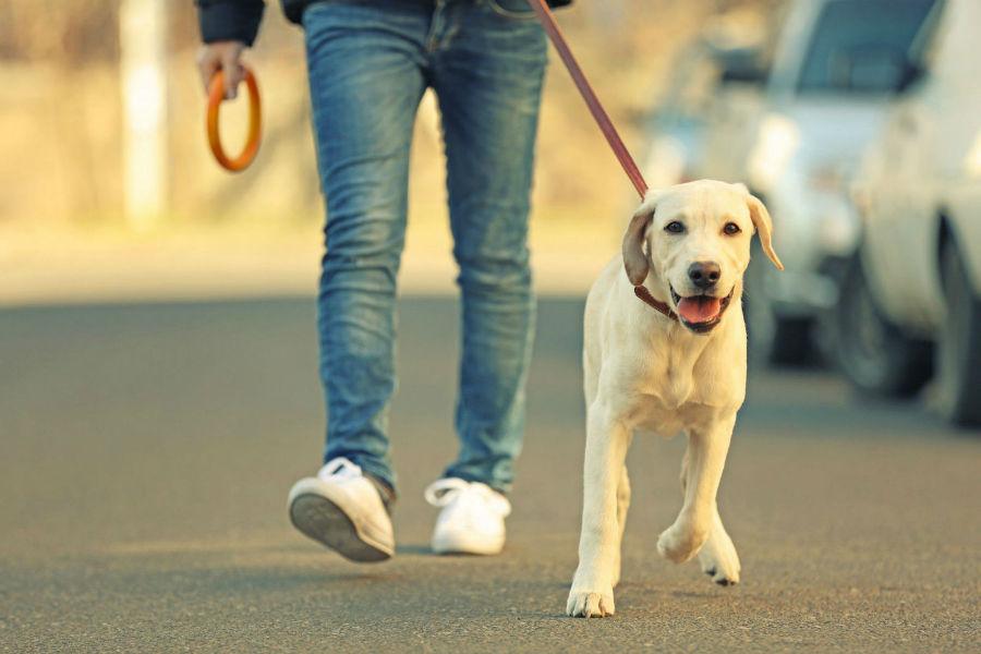 atividade-preferida-passear