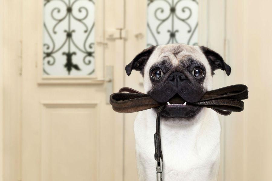atividades-preferidas-cachorros