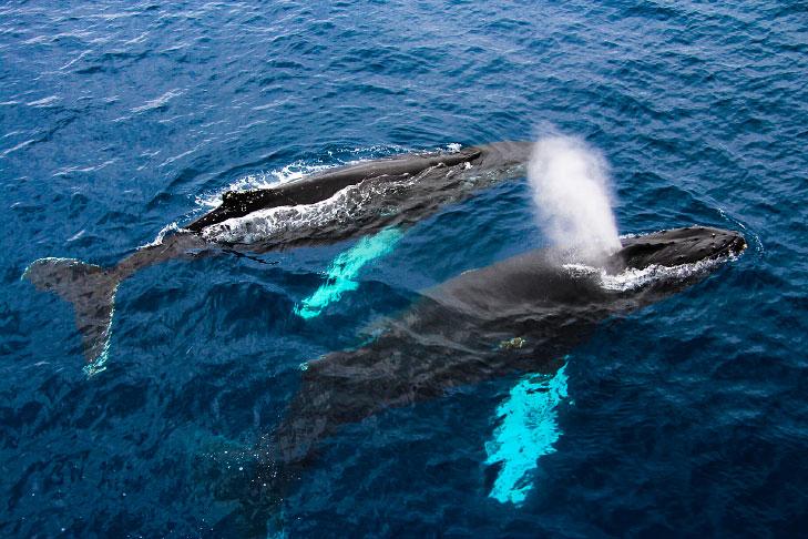 Há uma Lista da IUCN com os animais em extinção no Brasil.