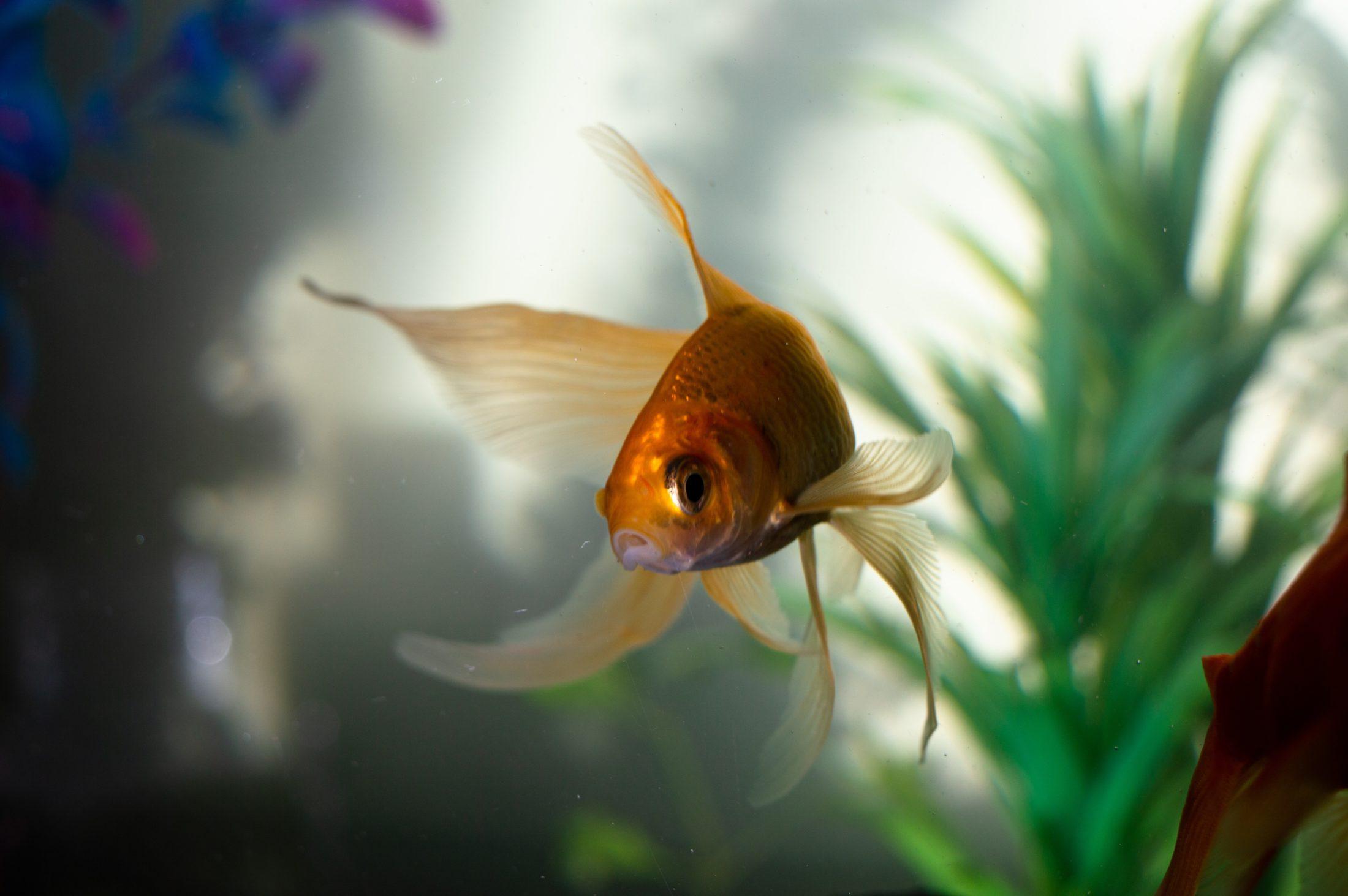 Para escolher a bombinha de aquário ideal fique de olho em fatores importantes como vazão e sistema de filtragem.