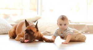 Boxer adulto e bebê