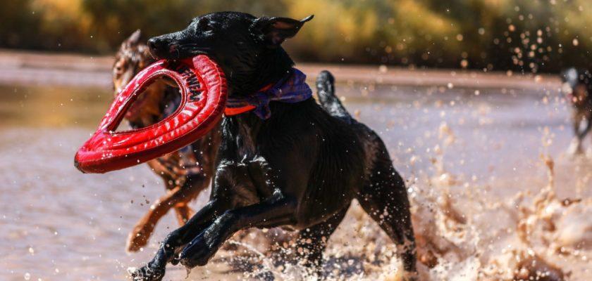brinquedos para cachorro grande são necessários