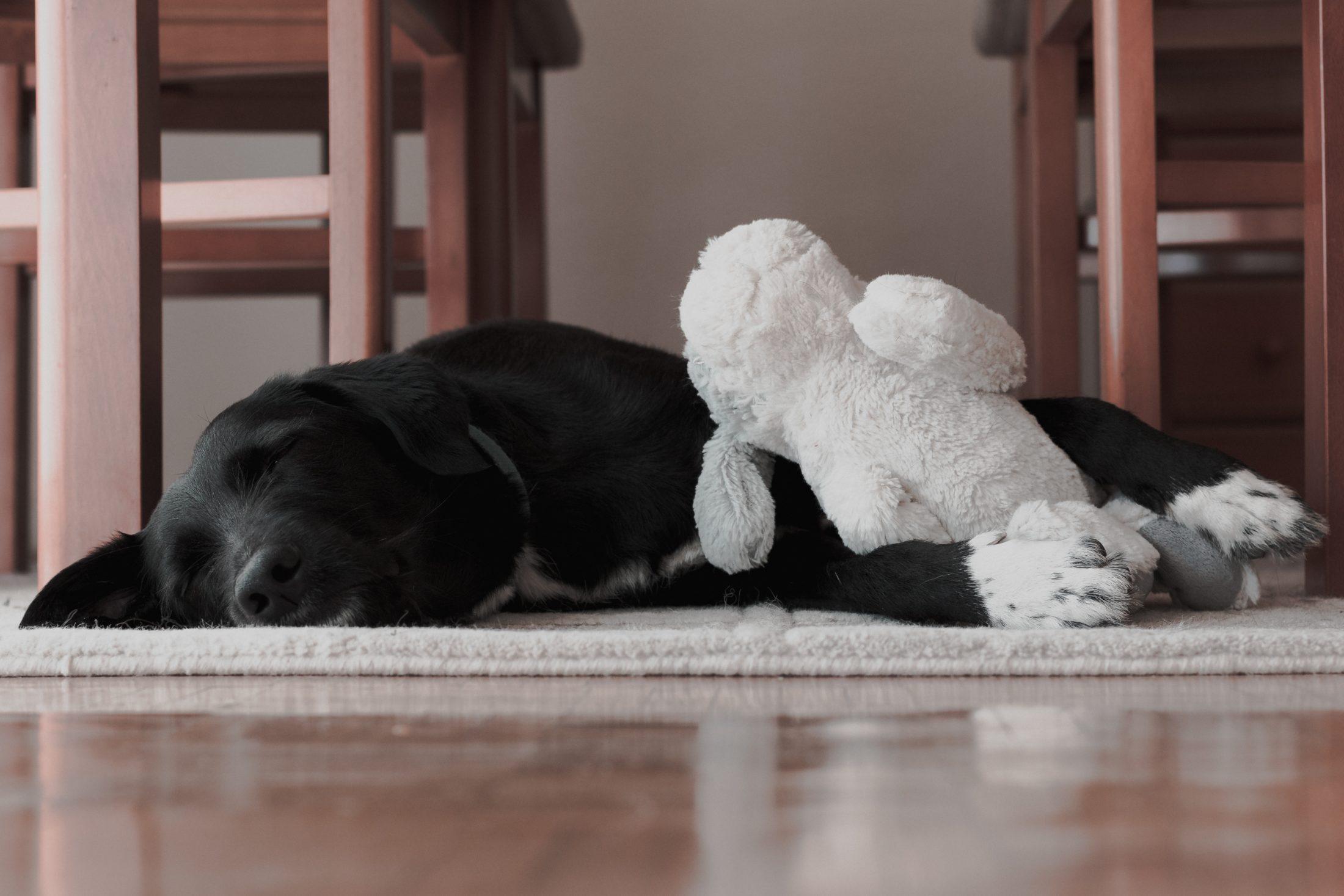 brinquedos para cachorro grande: segurança