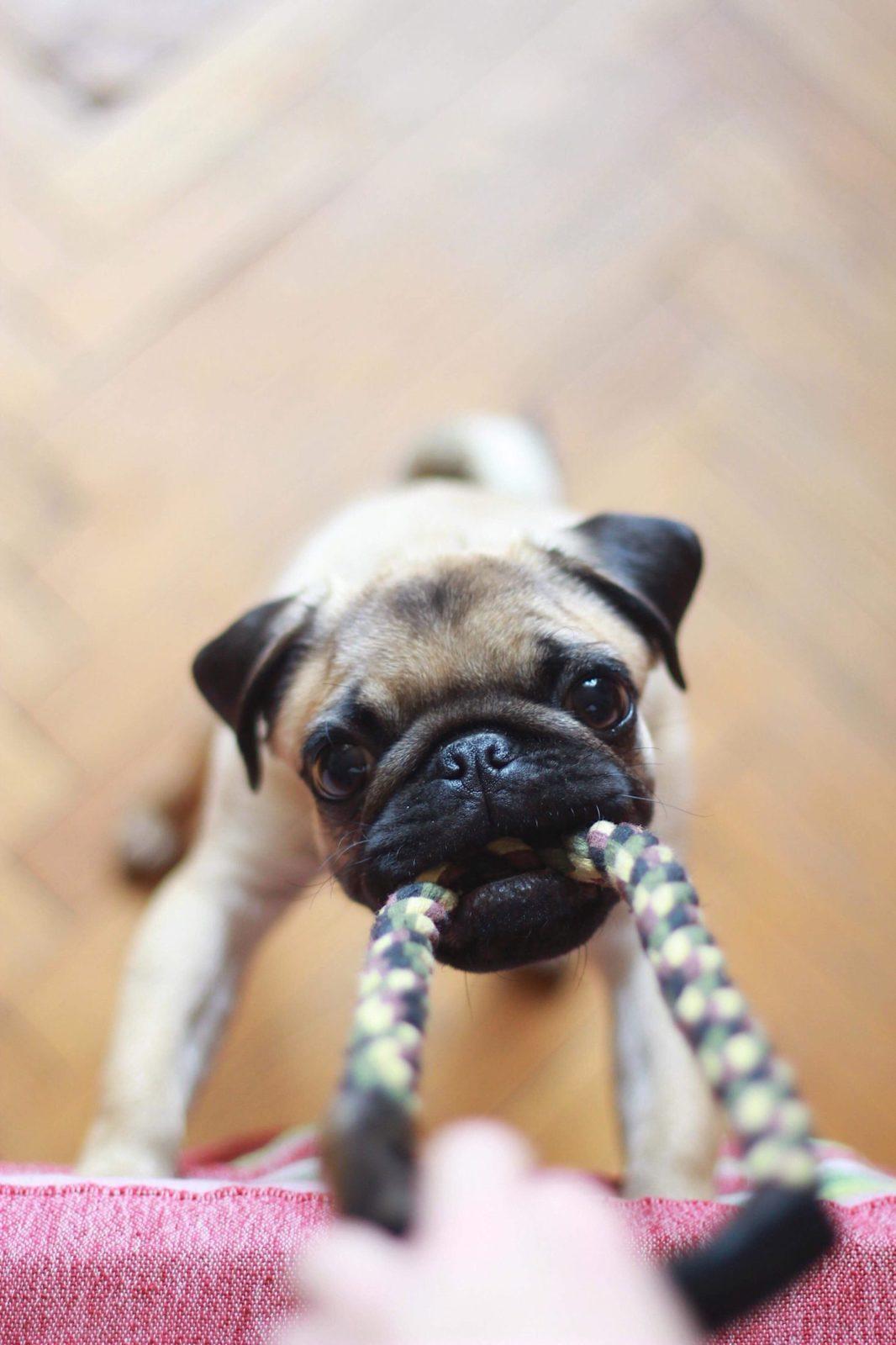 brinquedos para cachorro grande: cuidados