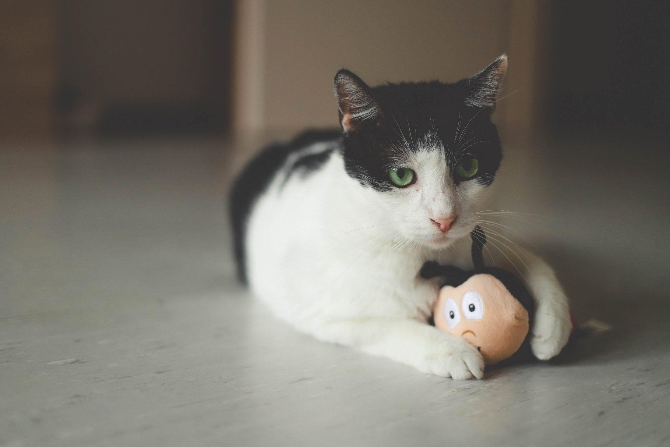 gato branco e preto bricando com brinquedo para gato de borracha