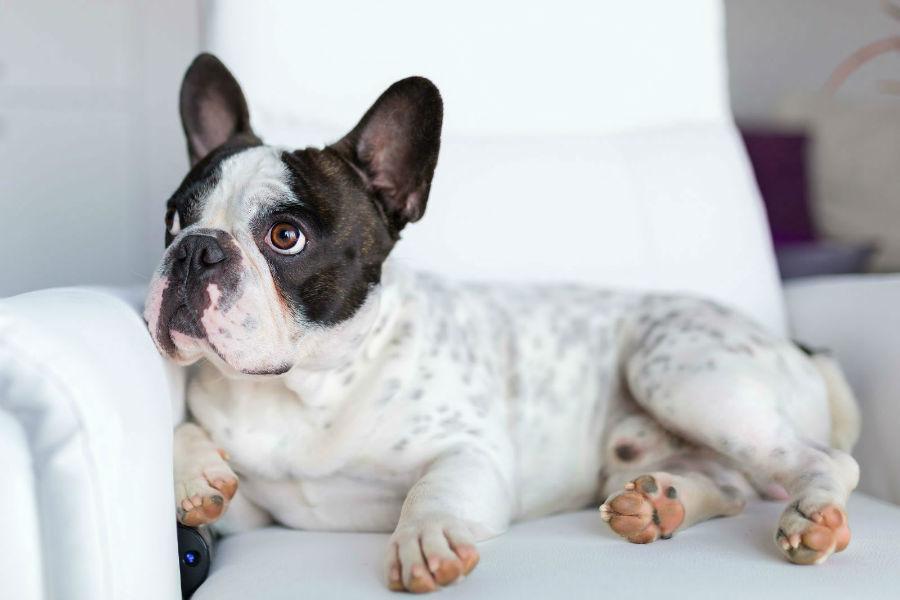 cachoror-atributos-naturais4