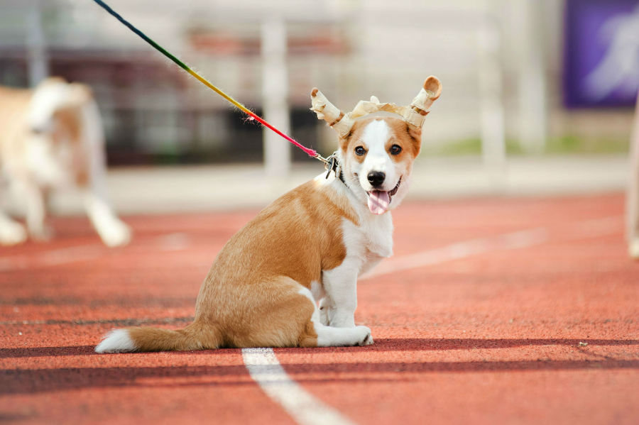 cachorro-atributos-naturais7