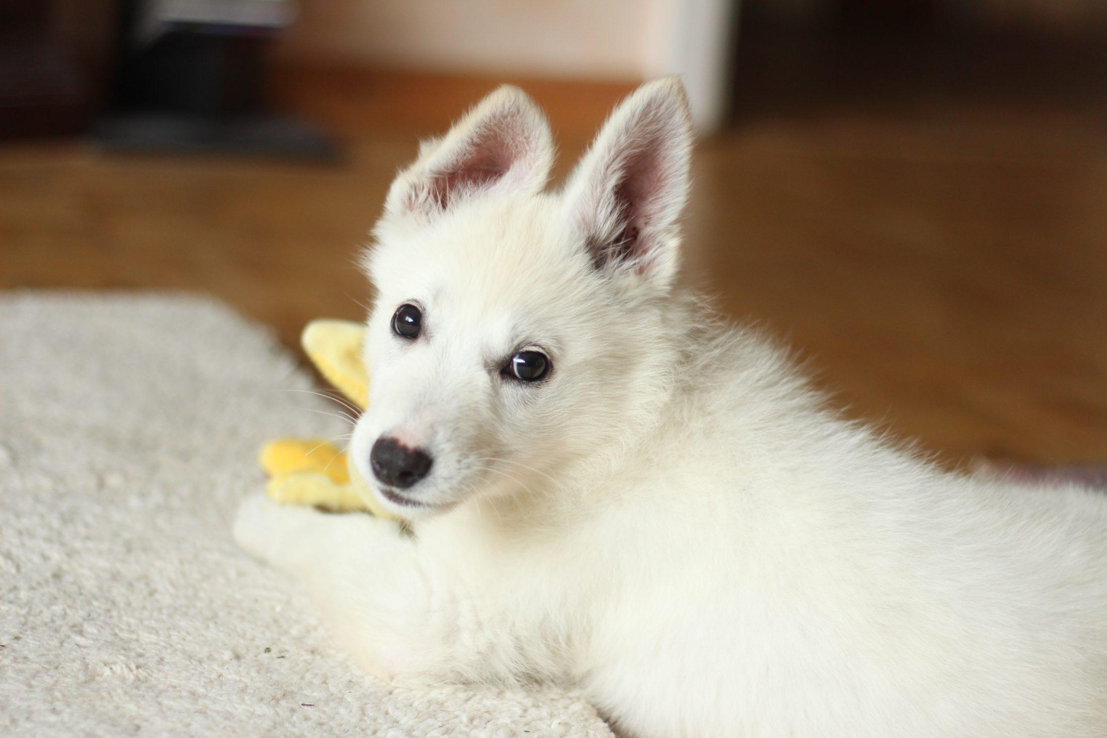 Um cachorro abaixado diante de seus pés é um pedido de atenção.