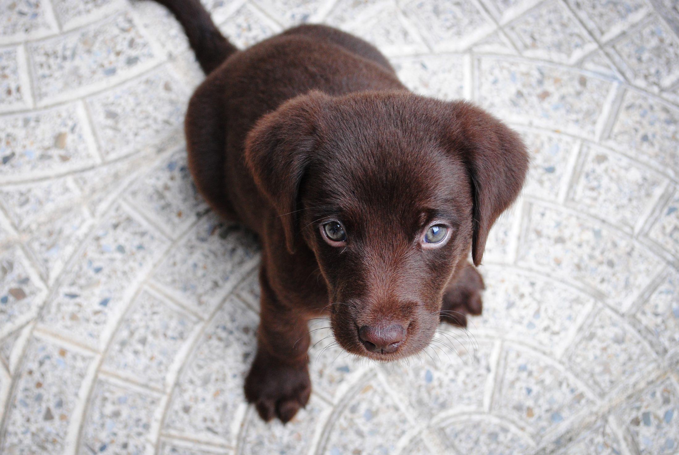 Um cachorro abaixado pode estar com medo de você ou de algo.