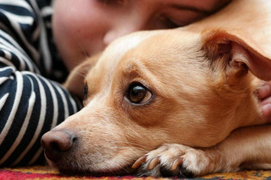 cachorro-adocao
