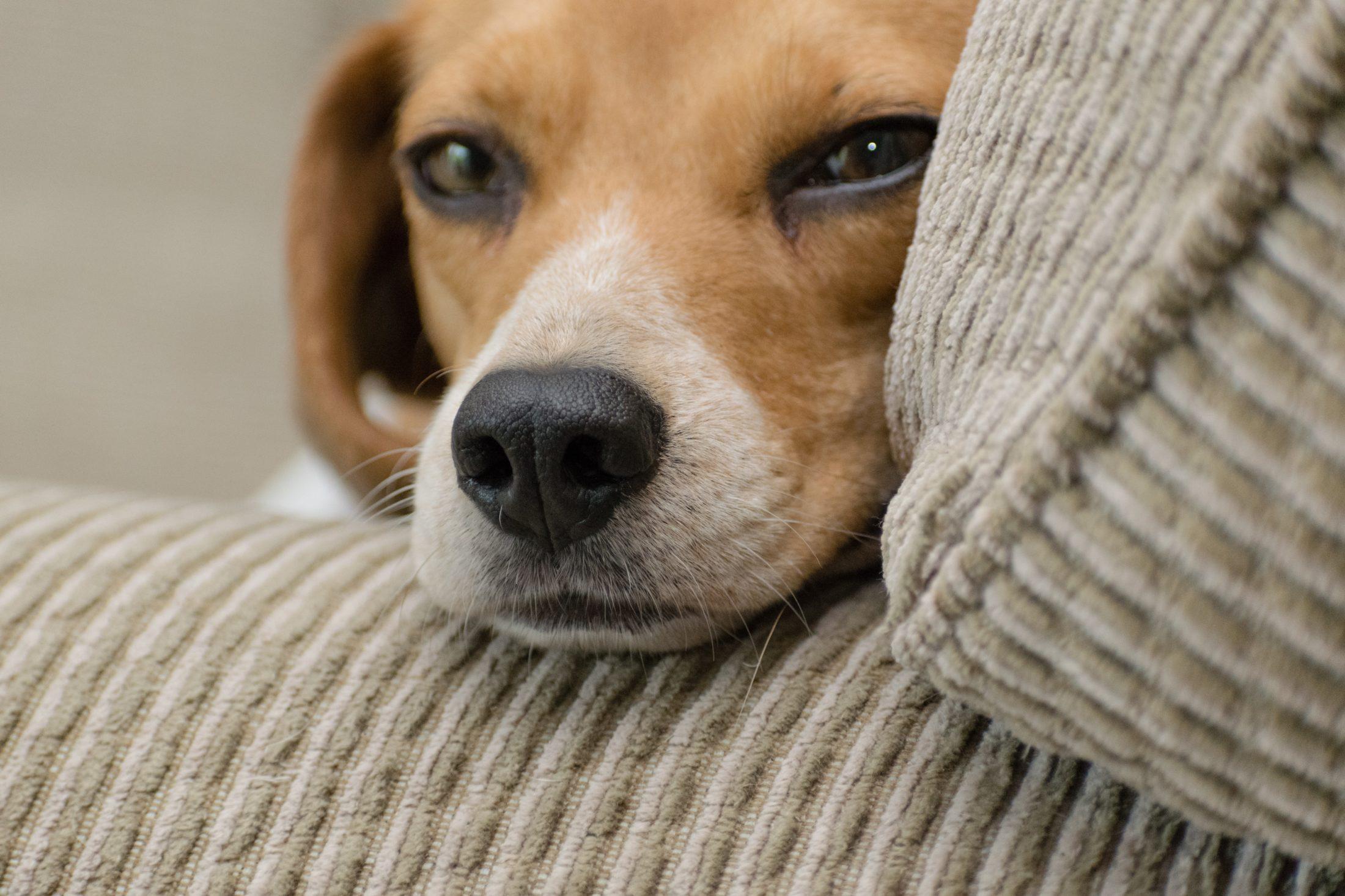 Você não deve mimar e encorajar ainda mais os comportamentos de um cachorro carente.