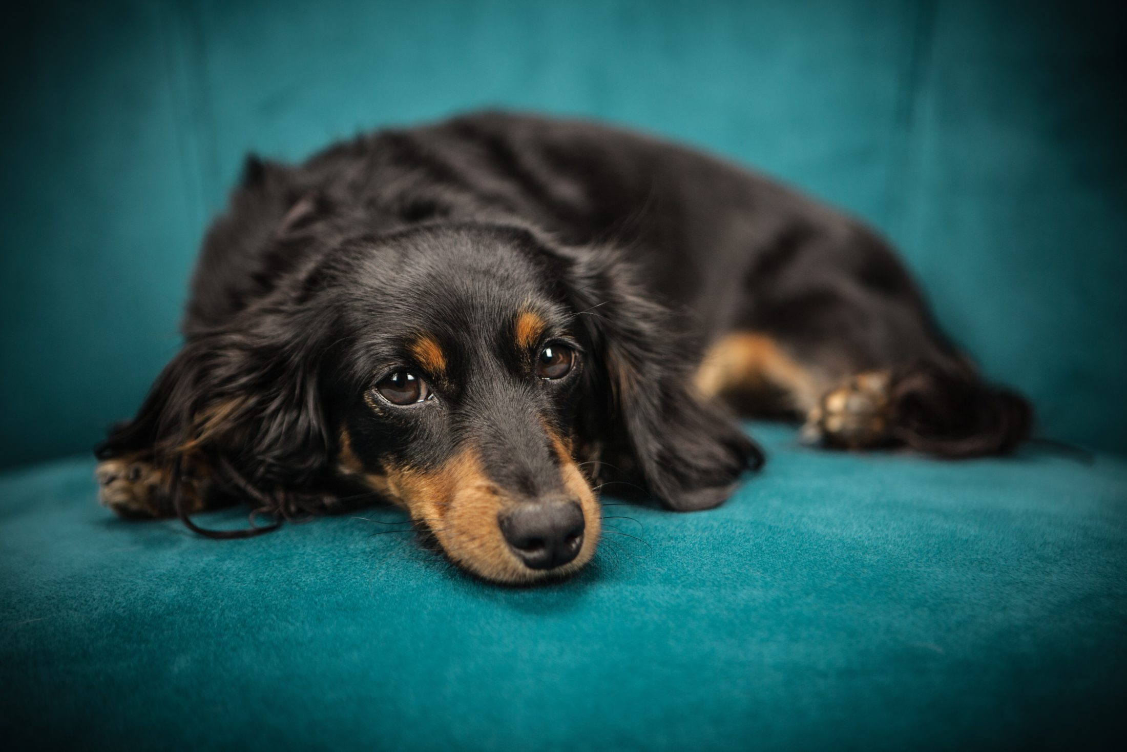cachorro carente necessita de afeto e atenção