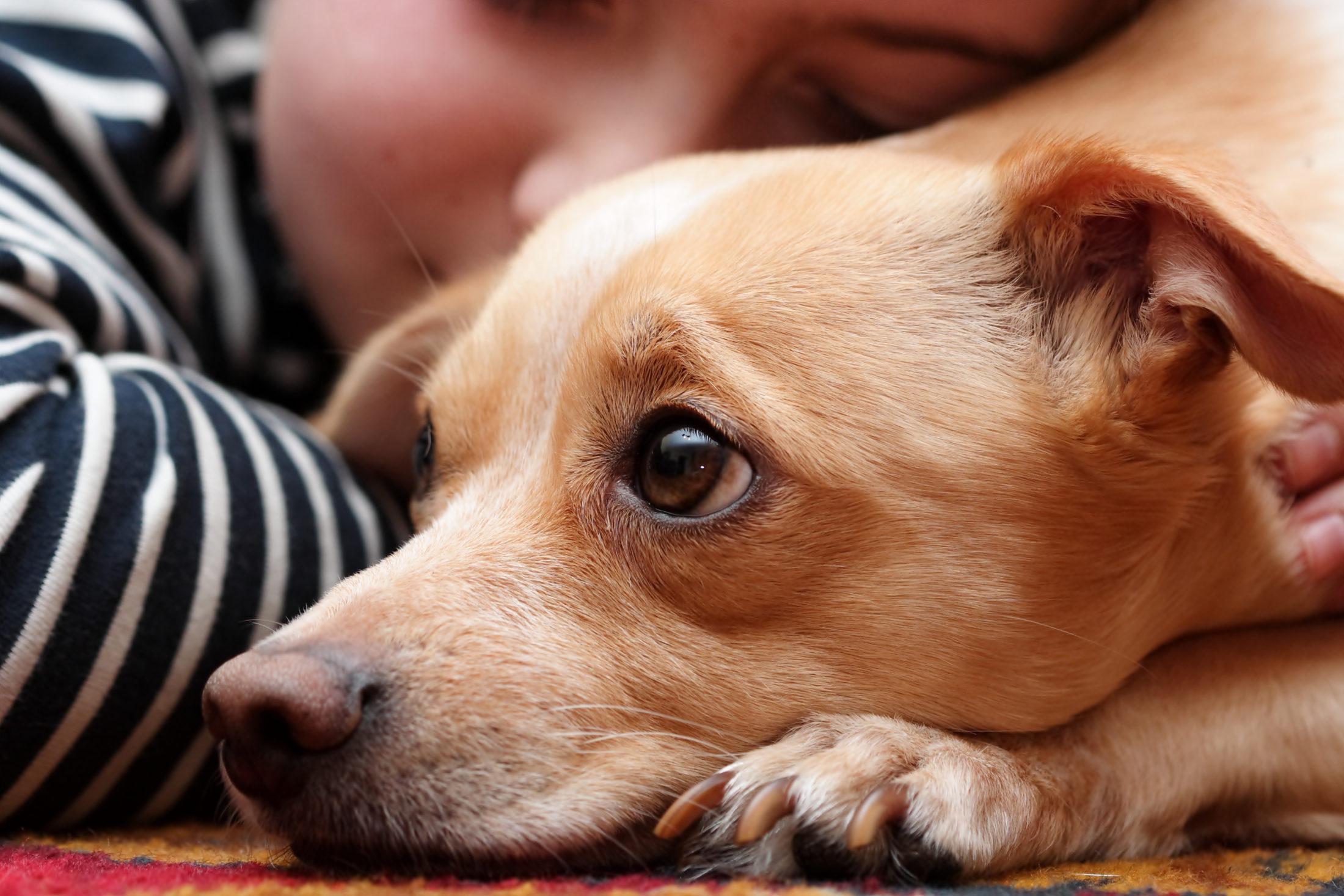 criança deitada ao lado de cachorro castrado