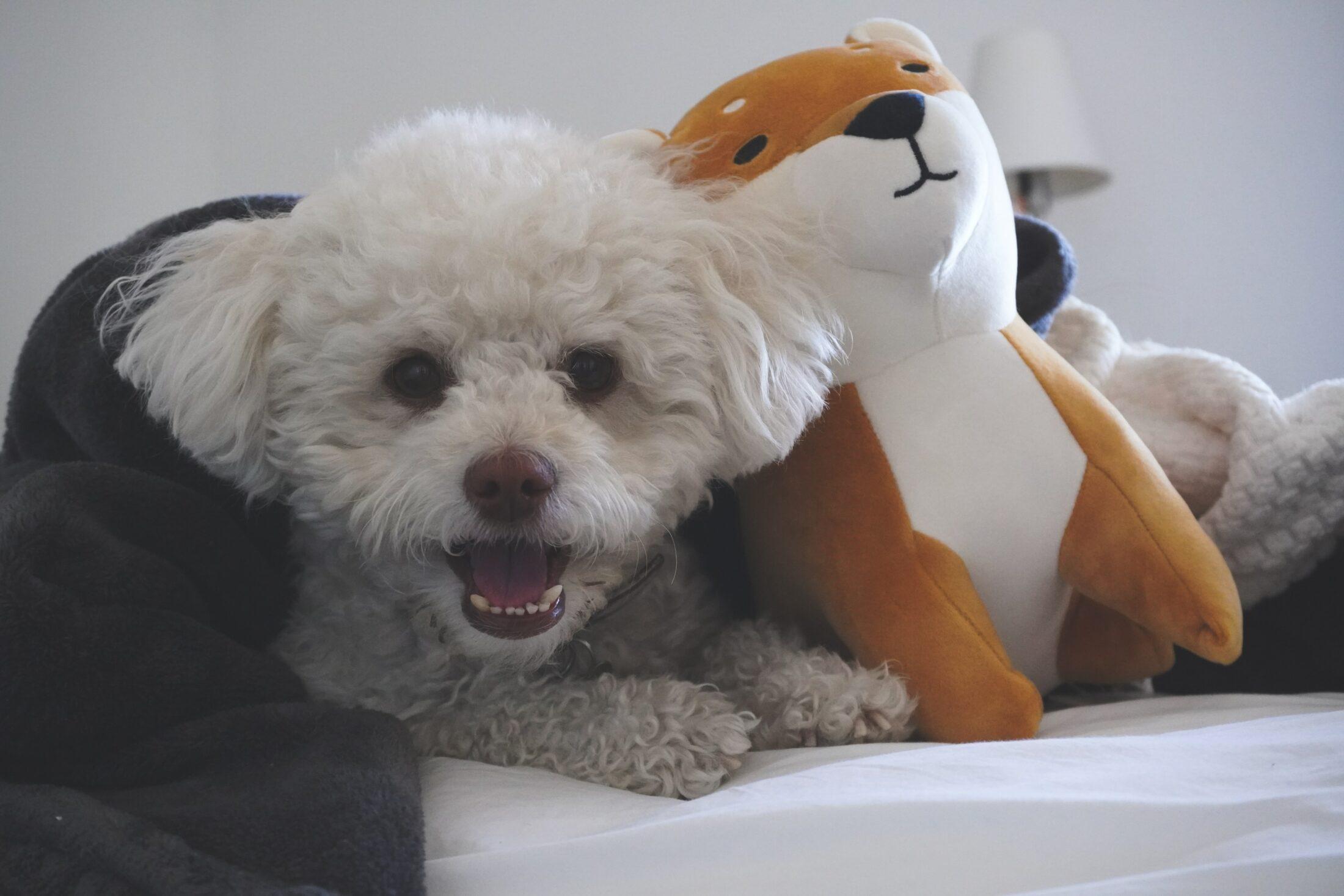 cachorro latindo na poltrona