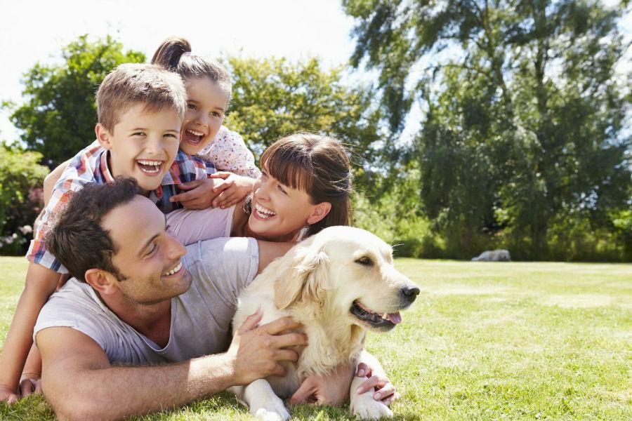 Cachorro filhote: Família se divertindo com cachorro Golden retriever.