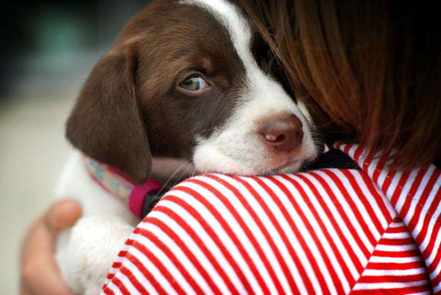 Cachorro filhote: Menina abraçada com o seu cachorro.