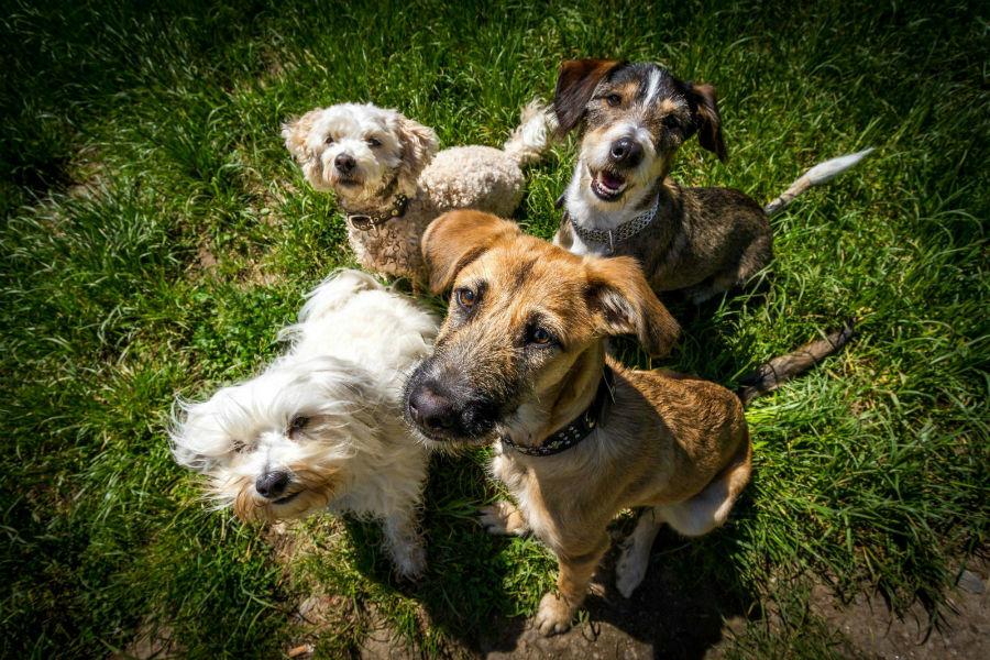 Cachorro filhote: Diferentes raças de cachorros juntas.