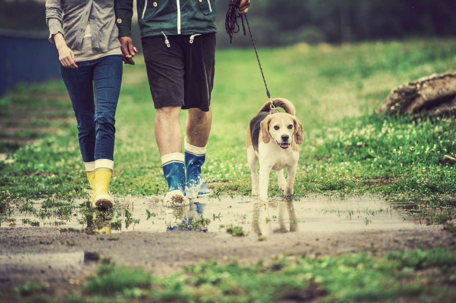 Cachorro filhote: Casal passeando com cachorro na chuva.
