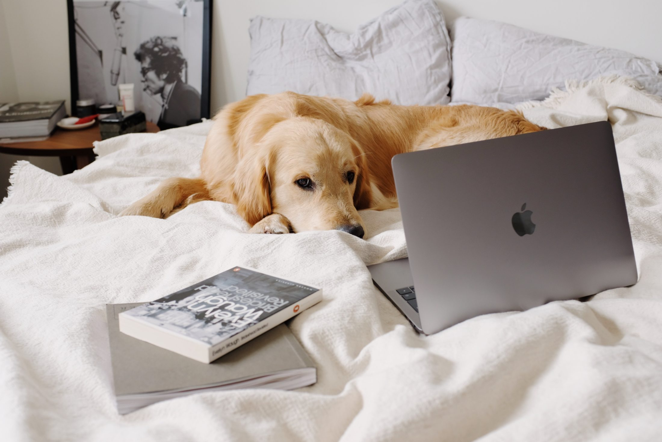 cachorro deitado na cama em frente a laptop