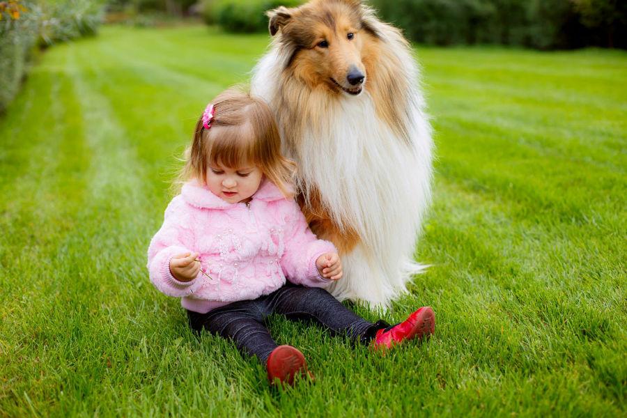cachorro-crianca-collie