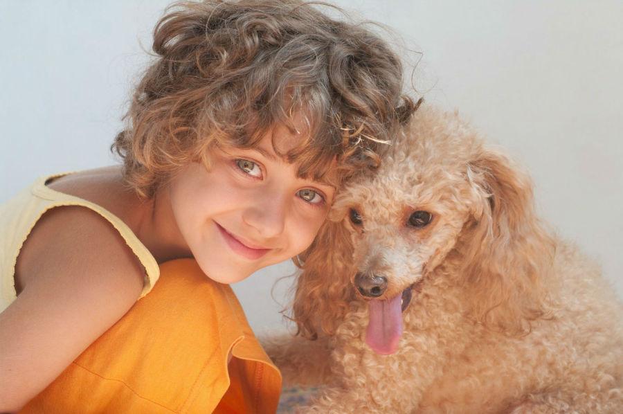 cachorro-crianca-poodle